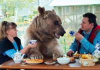 RUSIJA: Par živi sa medvjedom teškim 140 kilograma