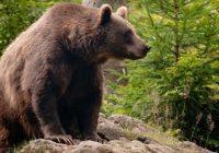 Rendžeri u Rumuniji spasili smeđeg medvjeda a on im ovako vratio
