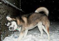 Psi poludjeli: U Sloveniji greškom ulice posipali solju s komadima pršuta i srdela