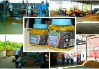 "Fabrika za preradu voća, povrća i začina ""Semberka"" počela s otkupom prvih količina krompira i povrća"