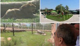 """Lava Tumu, zvijezdu zoo vrta Bingo, posjećuju gradonačelnici. Bandić: """"u Tuzli se razvija suvremeni zoološki vrt"""""""